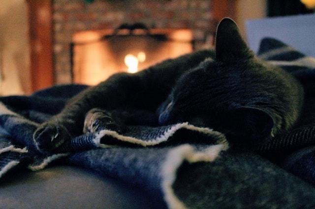 ネコが暖炉の前で寝ている