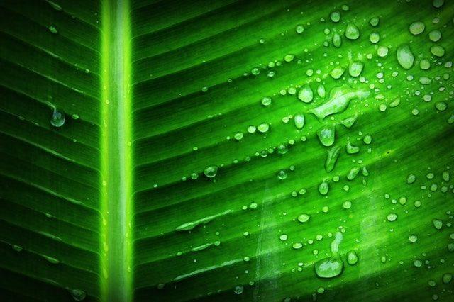 みずみずしい葉の画像