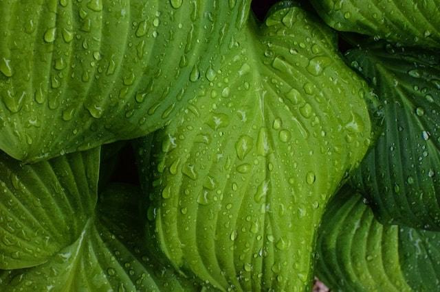雨に濡れた葉の画像